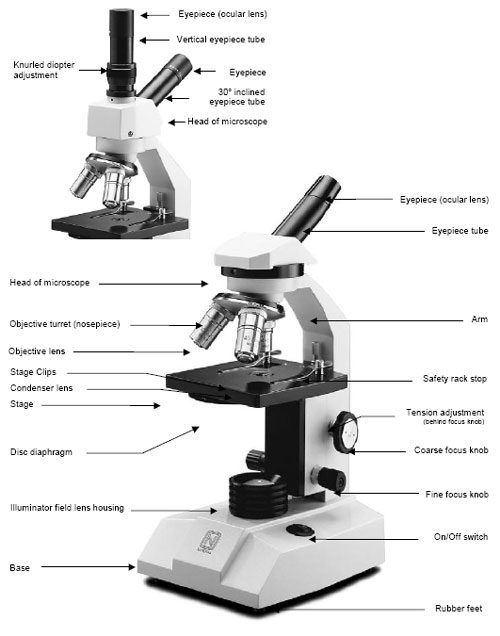 Compound Light Microscope Worksheet - andrewgarfieldsource