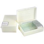 Swift MA803 prepared microscope slides.