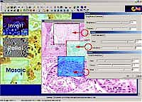 Image processing software feature